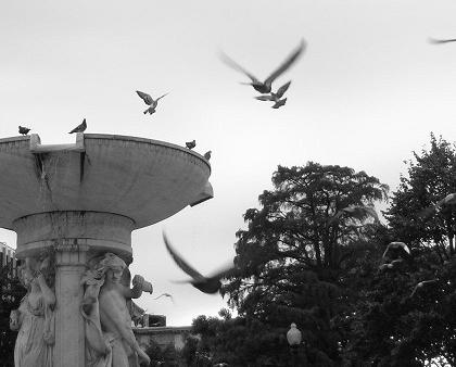 Birds and Dupont Circle fountain